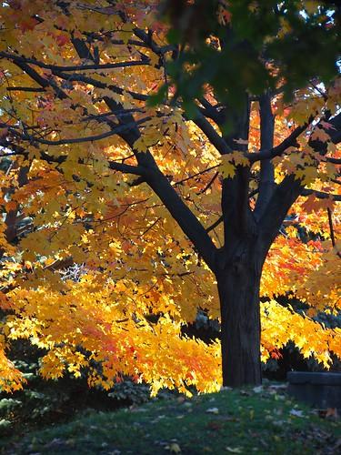 fall in Windsor