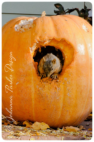 Squirrel-in-a-Pumpkin-3