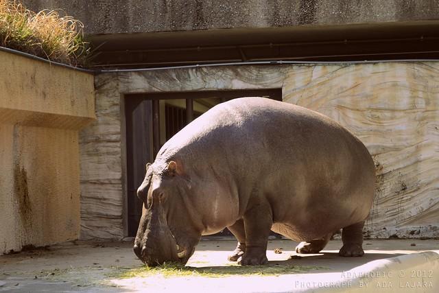 Ueno Park and Zoo, Tokyo