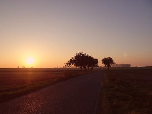 road autumn trees sunset sun sunlight mist fall nature sunshine yellow misty fog landscape gold golden countryside path foggy poland polska sunny sunlit countryroad tubądzin