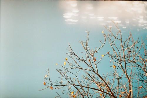 autumn;