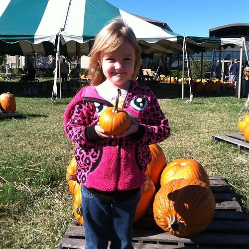 302:365 Picking out pumpkins