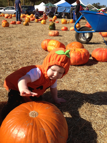 Inspecting the pumpkins