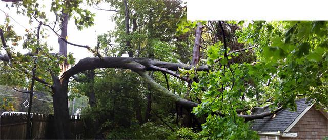 Tree Down-sm
