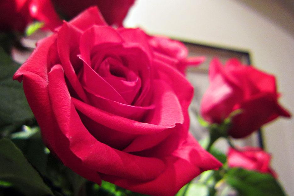101812_roses