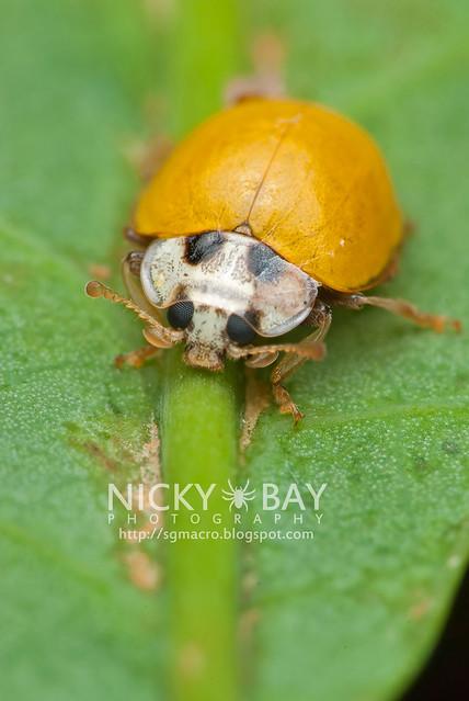 Beetle - DSC_7643