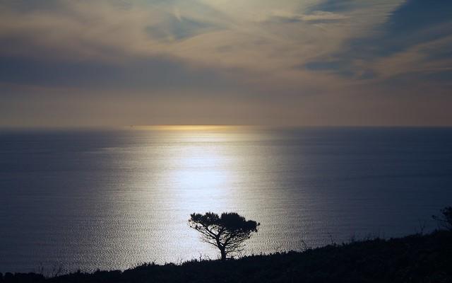 Solitario... / Lonely...