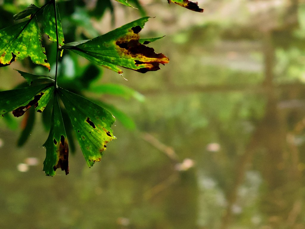 植物園2 by Pentax Q 直出+pentacon mc 50mm f1.8 再小試~含夜拍