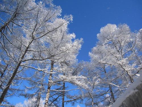 晴天の中の雪景色 by Poran111