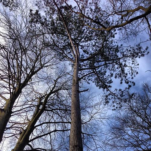 Canopy by Mark Avey