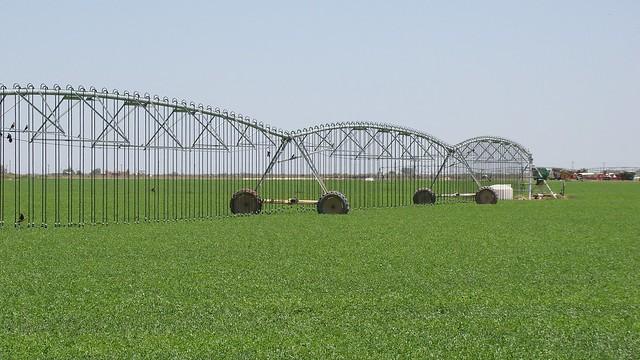 LESA/LEPA system on Gonzales' alfalfa field