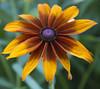 Botanic Gardnes-058