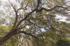 Orlando Treezus