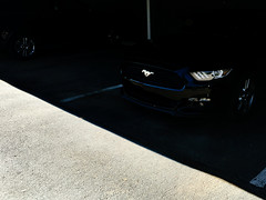A Mustang Galopping in the Shadow