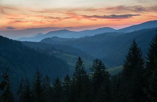 zlatar srbija serbia evening sunset cold summer forest pinetrees d7100 haze sigma nikon ngc novavaros zlatibor
