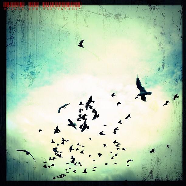 The Birds #iphone #iphoneography #birds #flight