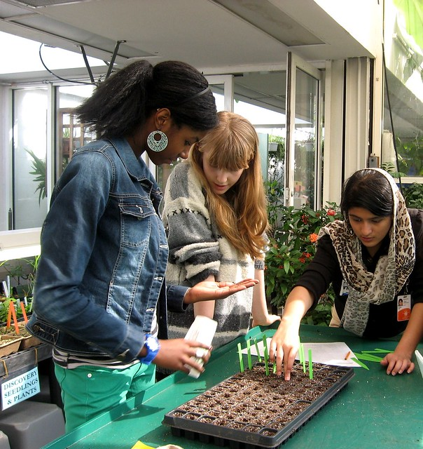 Planting trays of vegetable seedlings in early spring. Photo by GAP.