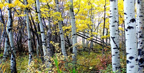 Autumn Calgary Alberta (7)