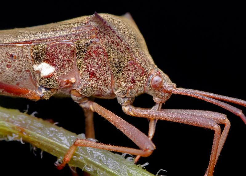 [IMGP0385-pp] Bug