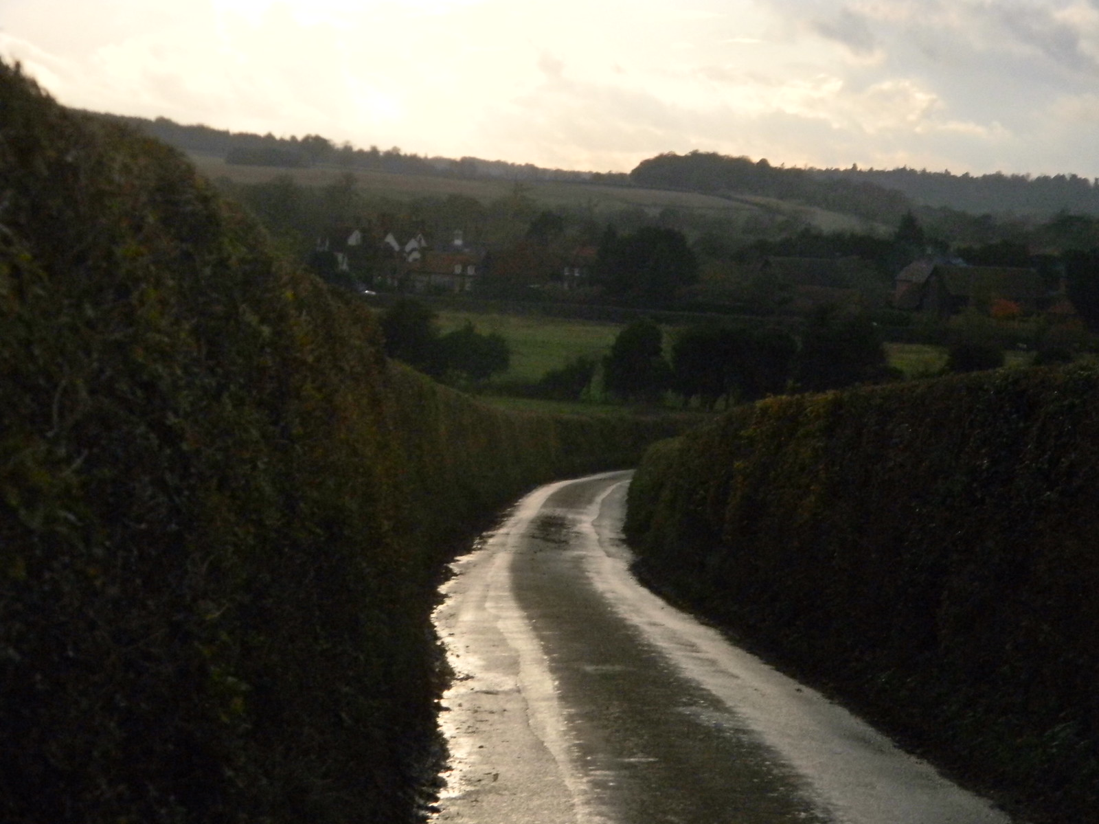 road and hedge Henley Circlular via Hambleden (short)