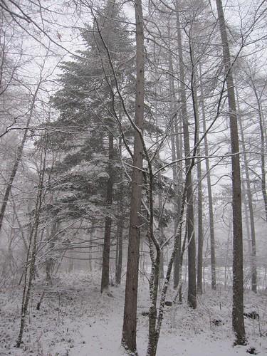 庭も一面の雪景色 2012.11.14 by Poran111
