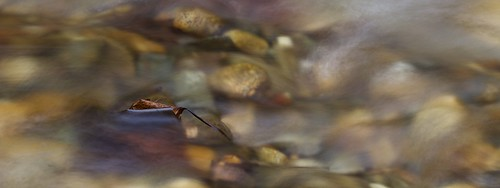 fall leaves stone canon river stream slow stones shutter