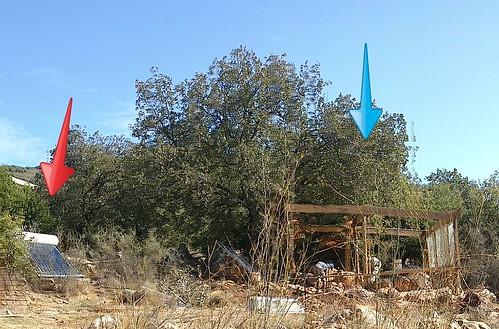 דרור בונה ביתו באמירים - זום