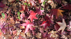 落ち葉は自ら、枝から離れる