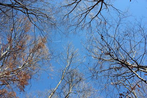 20121118_Arboretum_020
