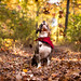 Joshua in the Magical Fall by dog breath photography