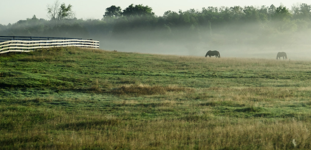 Horses grazing in the morning: places to visit near Owen Sound