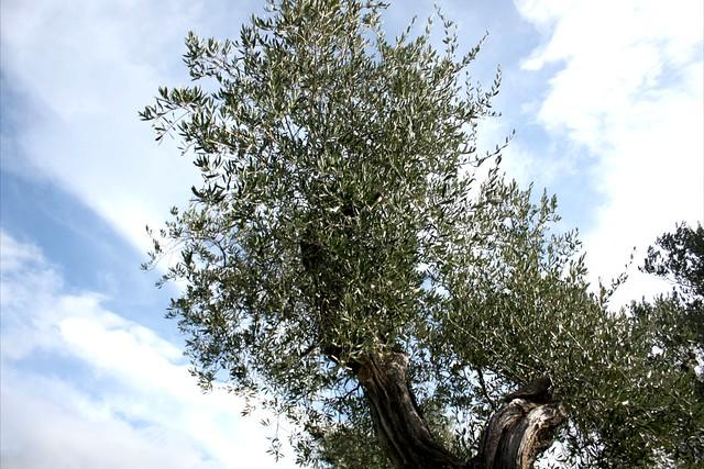 fattoria-lavacchio-smarbox-italia-23