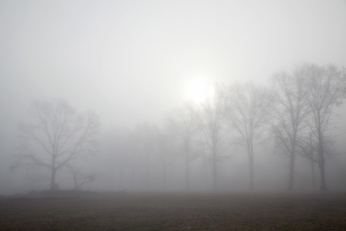 trees mist weather fog canon landscape mood scenic overcast thick visibility mamaroneck
