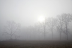 """The fog comes on little cat feet."" - Carl Sandburg"