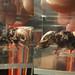 Small photo of Mummified Shrew