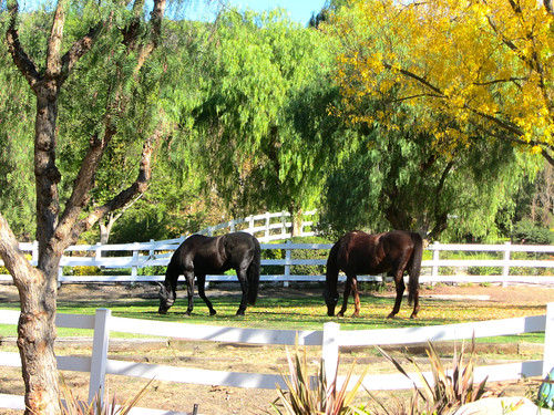 horses in the santa monica mountains