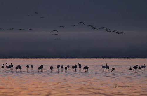 blue sea sky cloud nature colors sunrise canon iran cloudy flamingo dream explore miankale miankaleh canon60d felamingo میانکاله ghamarynezhad starrypix ghamarinezhad