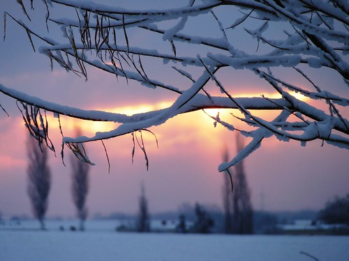 Winter's morning elegance