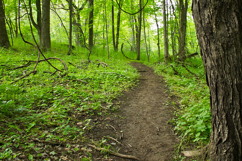 trees plants green nature grass forest canon vines woods quiet path trail bushes