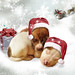 """Twas the Night before Christmas""... by rubyblossom."