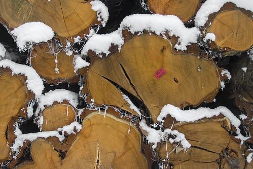 Fresh wood in Goluchow Park