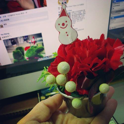 據說這是假裝成聖誕紅的康乃馨。
