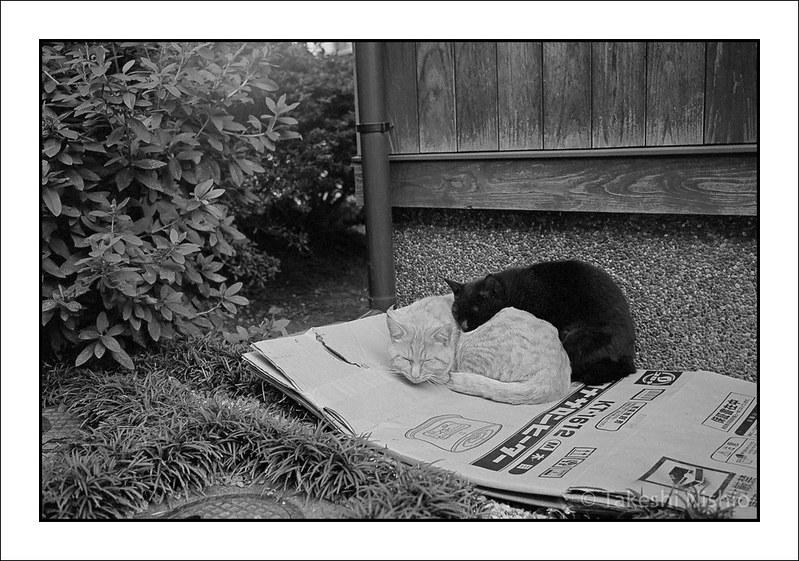 ねねここねねこ / Sleeping cat & Sleeping kitten