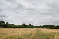 London Loop - Countryside