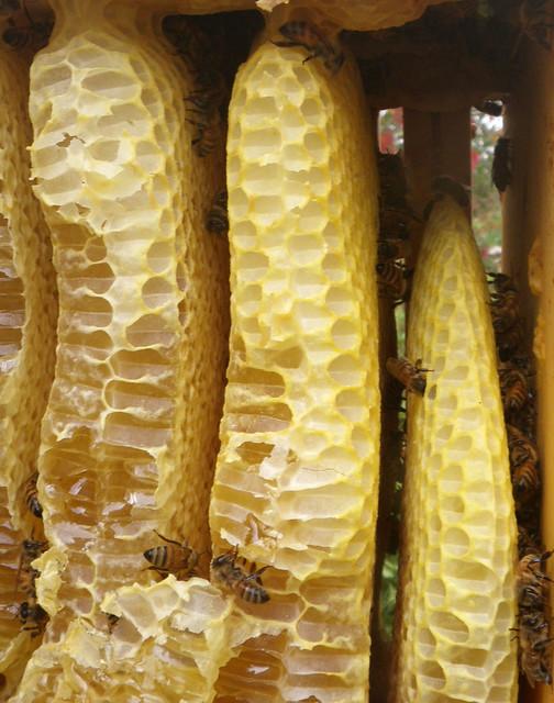 warre honey box bee space