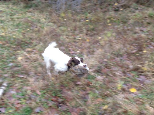 Grouse Hunting with Steve and Cayenne