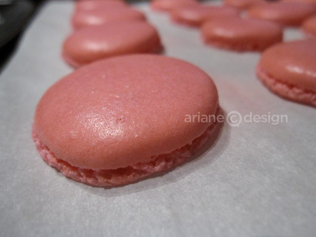 Simply French Cafe Macaron Class-16