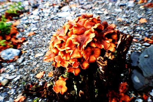 Fungi at Loch Ard