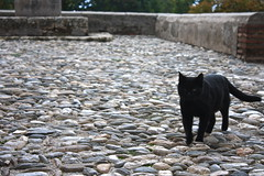 Black cat, La Alhambra, Granada, Spain