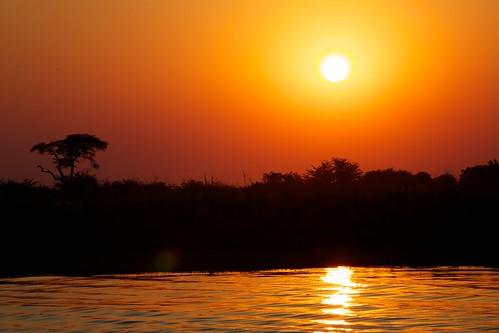 africa travel botswana chobe